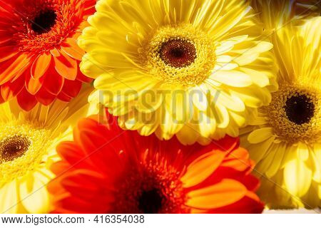 Yellow And Red Flowers, Red And Yellow Gerber, Red And Yellow Flowers Background