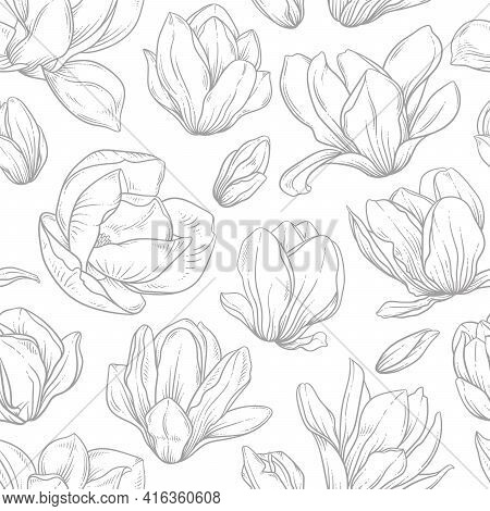 Seamless Pattern With Magnolia Flowers. Blooming Buds In Sketch Style On White Background. Imitation