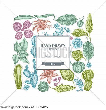 Square Floral Design With Pastel Ficus, Iresine, Kalanchoe, Calathea, Guzmania, Cactus Stock Illustr