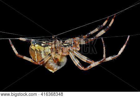 Spider On Spider-web 34