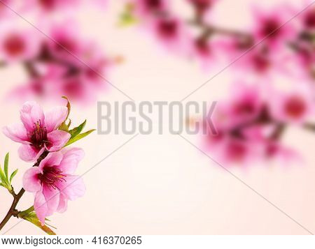 Pink Peach Blossom Frame Background, Floral Card