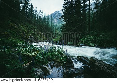 Atmospheric Forest Landscape With Rapids On Powerful Mountain River Between Rocks With Mosses, Trees