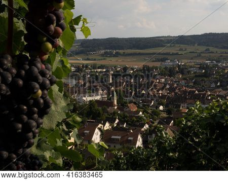 Wine Grapes Vineyard View Of Stein Am Rhein Historic Old Town City At The Rhine River In Schaffhause