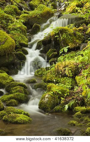 Rushing water flows down the side of a mountain in the Smokies.