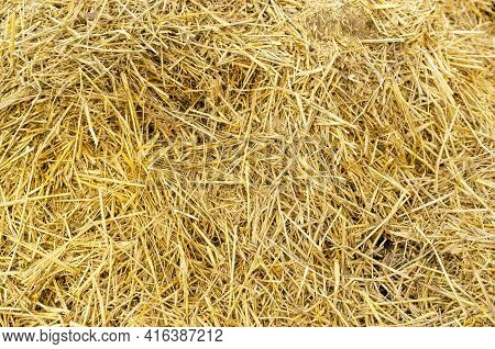 Hay Bale Background. Hay Texture For Agriculture