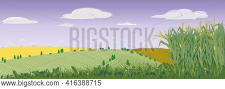 Rural Landscape With Fields, Meadows And Cornfield. Panorama With A Grain Harvest Against The Backgr