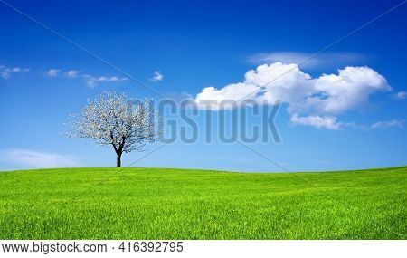 Spring time in nature with blooming tree