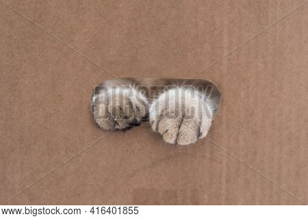 Fluffy Paws Of A Cat In The Slit Of A Cardboard Box