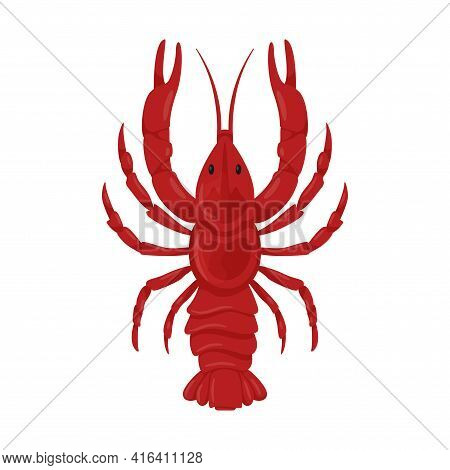 Boiled Fresh Red River Crayfish With Pincers. A Crustacean Animal. Food Ingredient, Delicacy. Flat C