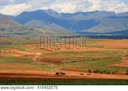 Traditional Agricultural Farming And Mountain Landscape In  Malealea, Lesotho.