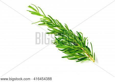 Branch Of Fresh Rosemary Isolated On White Background. Rosemary Is A Rich Source Of Antioxidants And