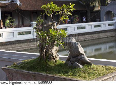 Hanoi, Vietnam - January 06, 2017: A Bonsai Tree In A Temple Of Hanoi