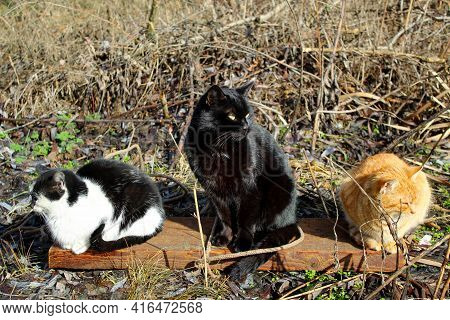 Three Cats Of Different Colors Are Sitting Looking In Different Directions, Like Three Heroes In Rus