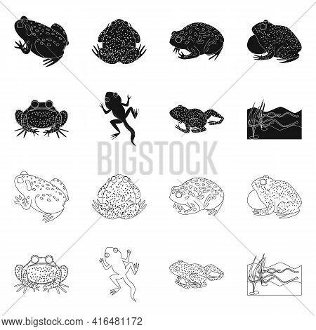 Vector Design Of Wildlife And Bog Symbol. Set Of Wildlife And Reptile Vector Icon For Stock.