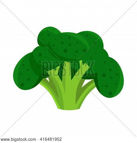 Vector Illustration Of Broccoli And Cabbage Icon. Collection Of Broccoli And Ingredient Vector Icon