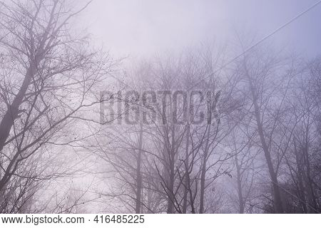 Bare Tree Branches On A Hazy Autumn Day