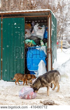 Two Stray Dogs Take Away Garbage Bags At Winter Day Under Snowfall