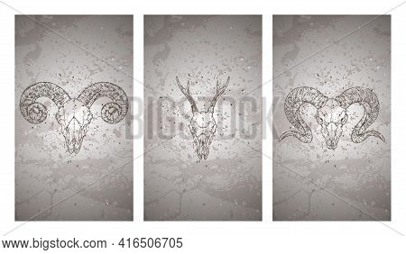 Vector Set Of Three Illustrations With Hand Drawn Skulls Roe Deer And Rams On Grunge Texture Backgro