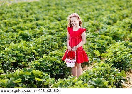 Child Picking Strawberry On Fruit Farm Field On Sunny Summer Day. Kids Pick Fresh Ripe Organic Straw