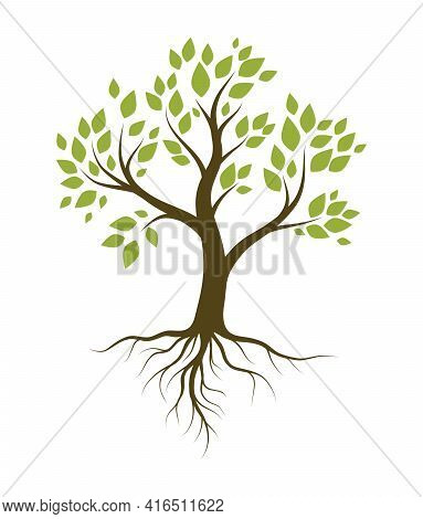 Tree With Green Leaves And Root System. Color Vector Illustration Isolated On White Background