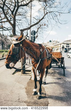 Palermitan horse cart with white hat in Palermo old town, Sicily, Italy. Attraction for tourists.