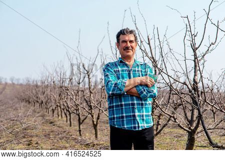 A Front View Of Senior Farmer Standing In Orchard. Senior Farmer Pruning Tree In Orchard. With Pruni