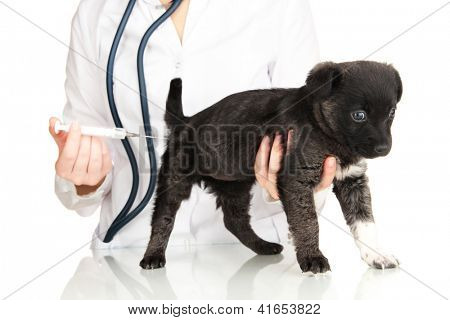 Veterinary surgeon is giving vaccine to  puppy poster