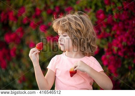 Organic Nutrition. Child Eats Strawberries. The Schoolboy Is Eating Healthy Food. Happy Childhood Co