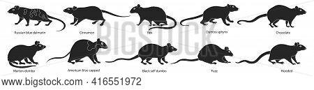 Mouse Vector Illustration On White Background. Isolated Black Set Icon Animal. Vector Black Set Icon