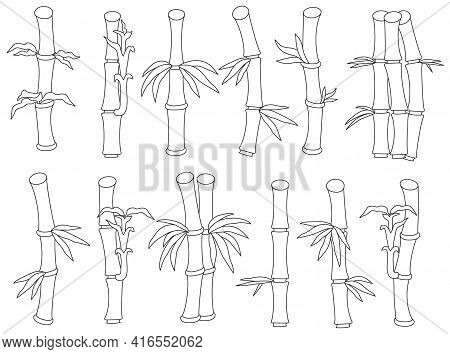 Bamboo Isolated Outline Set Icon. Vector Illustration Tree On White Background. Vector Outline Set I