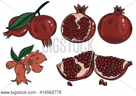 Pomegranate Set. Bright Colorful Fruits. Pomegranate Fruits Whole And Halves, Flowers. Fruit On A Br