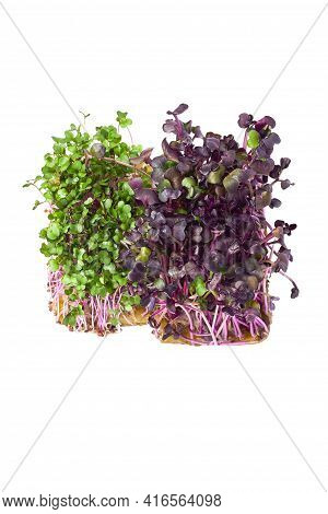 Micro-green Plant Sprouts Isolated On A White Background. Radish Is Green And Red Micro Green. Assor