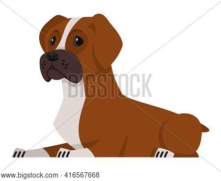 Lying Boxer Dog. Beautiful Pet In Cartoon Style.