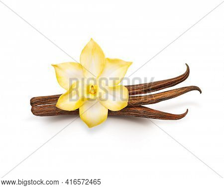 Vanilla pods isolated. Dried vanilla sticks and vanilla flower on white background. Aromatic ingredient for baking.
