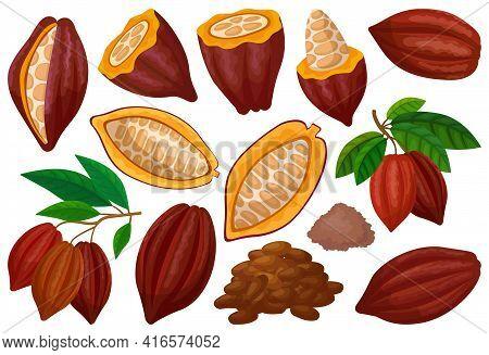 Cocoa Bean Isolated Cartoon Set Icon. Vector Illustration Chocolate Fruit On White Background. Vecto