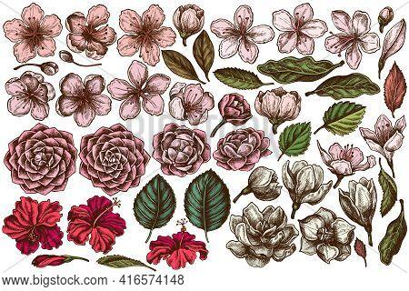 Vector Set Of Hand Drawn Colored Hibiscus, Plum Flowers, Peach Flowers, Sakura Flowers, Magnolia Flo