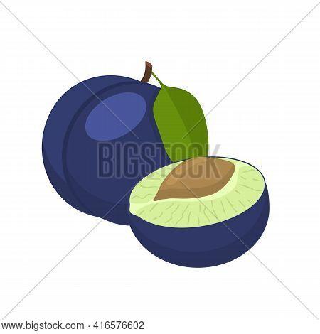 Plum Vector Illustration. Whole And Cut Blue Plum Fruit