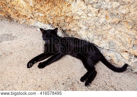 Lazy Black Cat Is Lying Down . Relaxed Feline