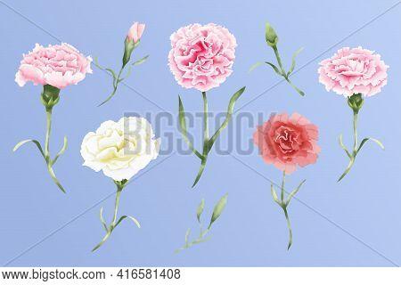 ฺฺbeautiful Watercolor Carnation Flowers Set Vector Illustration
