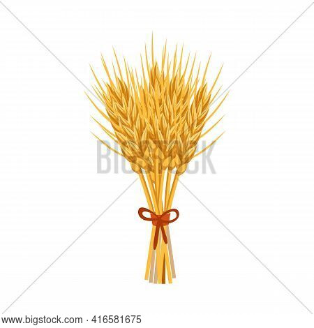Isolated Object Of Barley And Sheaf Sign. Collection Of Barley And Malt Stock Vector Illustration.