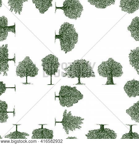 Seamless Pattern Of Various Drawn Deciduous Trees In Summer