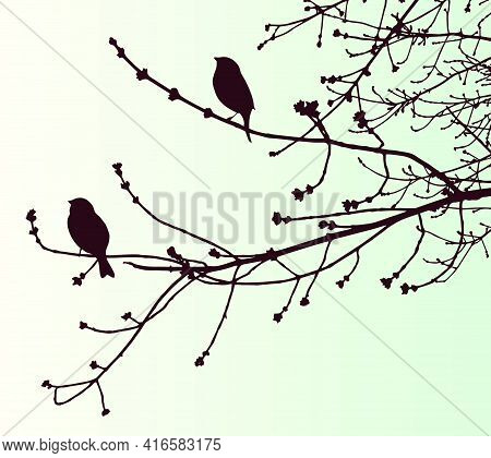 Illustration Of Silhouettes Sparrows On Tree Branches In Springtime