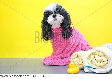 Dog In A Grooming Salon; Dog After Shower, Wrapped In A Towel. Pet Gets Beauty Treatments In A Dog B