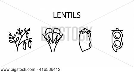 Lentil Line Icon In A Simple Style. A Set Of Vector Icons In A Simple Style, Isolated On A White Bac