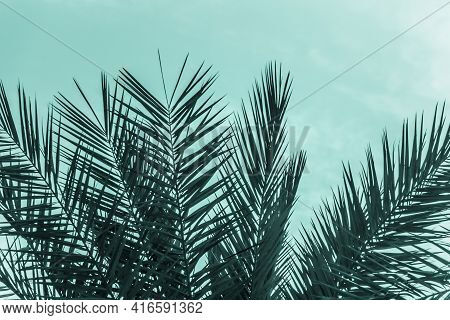 Tropical Tourism Paradise Palms Sunny Summer Sun Turquoise Sky. Sun Light Shines Through Leaves Of P
