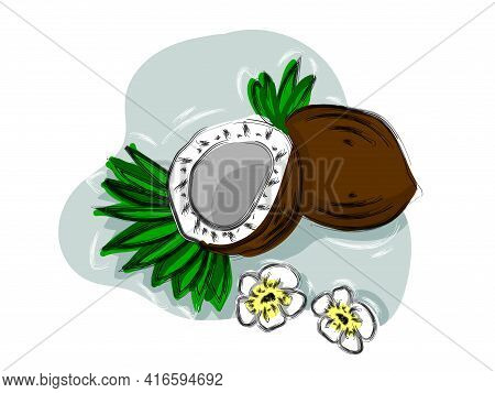 Hand-drawn  Fruit Coconut, Coconut Halves And Palm Leaves.  Vector Tropical Food Illustration.