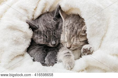 2 Sleepy Kittens Cuddle Up Sleep Comfortably In White Blanket. Family Couple Of Cats Are Resting Tog