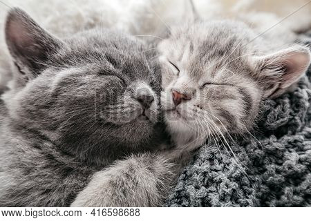 2 Kittens Gently Rub Kiss And Hug On Knitted Blanket, Covered With Plaid. Couple Of Cats In Love Fri