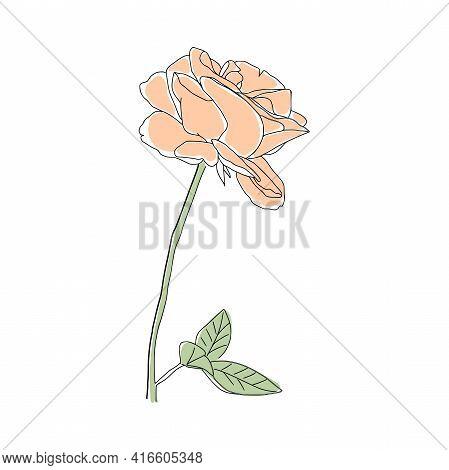 Abstract One Line Rose Flower. Botanical Contour Drawing. Organic Shape Backgroud. Modern Minimal Ar