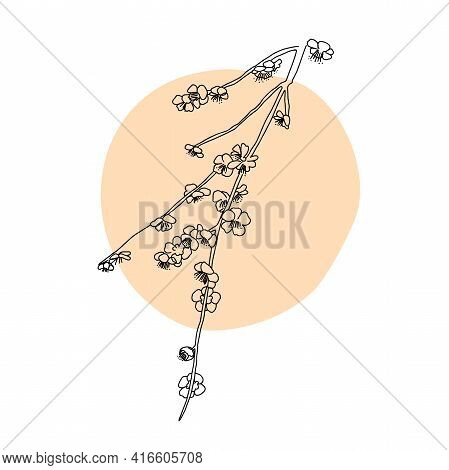 Abstract One Japanese Plum Or Sakura Flowers. Botanical Contour Drawing. Organic Shapes Backgroud. M